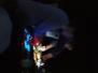 Glitterbug feat. Ronni Shendar live!
